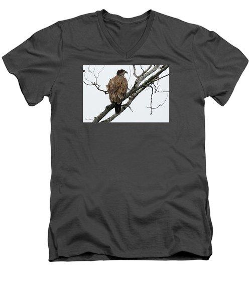 Juvenile Eagle  Men's V-Neck T-Shirt by Steven Clipperton