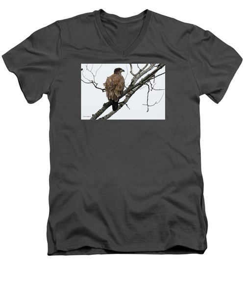 Juvenile Eagle  Men's V-Neck T-Shirt