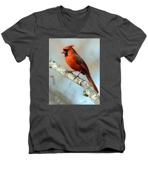 Male Cardinal Men's V-Neck T-Shirt by Debbie Green