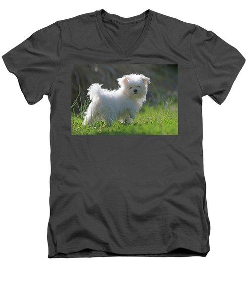 Maltese Men's V-Neck T-Shirt