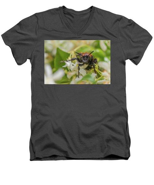 Men's V-Neck T-Shirt featuring the photograph Mammoth Wasp Megascolia Maculata Maculata by Jivko Nakev