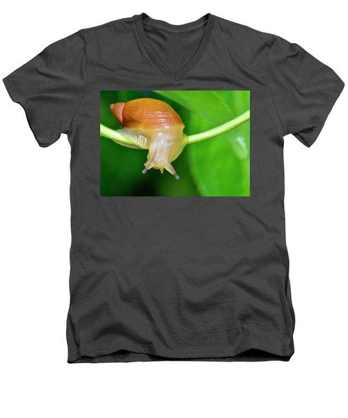 Morning Snail Men's V-Neck T-Shirt
