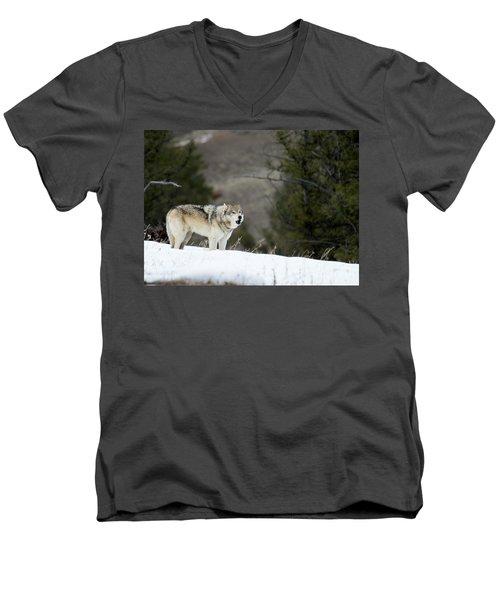 Mr. Brown Men's V-Neck T-Shirt