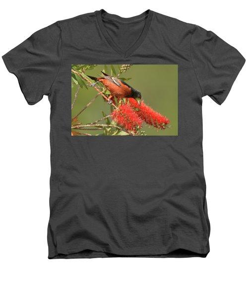 Orchard Oriole  Men's V-Neck T-Shirt by Alan Lenk