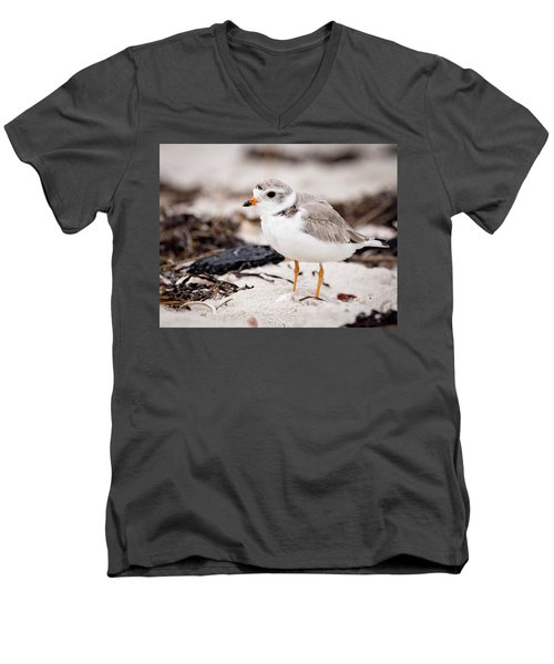 Piping Plover Men's V-Neck T-Shirt