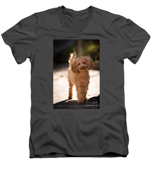 Poodle Men's V-Neck T-Shirt by Maurizio Bacciarini