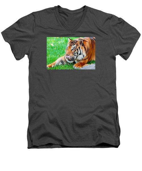 Pre-pounce Tiger Men's V-Neck T-Shirt