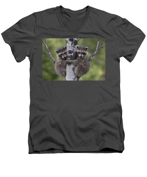 Raccoon Two Babies Climbing Tree North Men's V-Neck T-Shirt