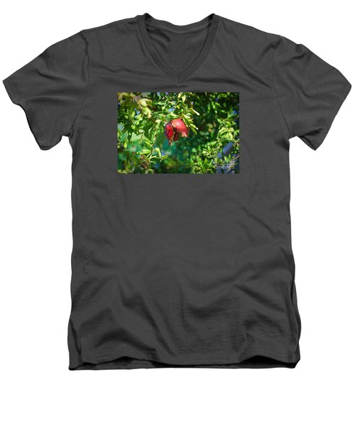 Ripe Pomegranate On The Tree In Jerusalem During Sukkoth Men's V-Neck T-Shirt
