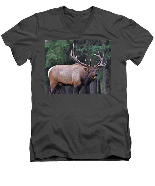 Royal Roosevelt Bull Elk Men's V-Neck T-Shirt by Jack Moskovita