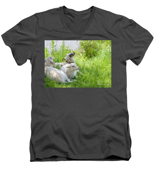Men's V-Neck T-Shirt featuring the photograph Three Little Lambs by Patricia Hofmeester