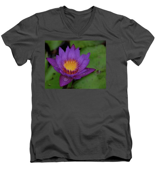 Water Lily Men's V-Neck T-Shirt by Ronda Ryan