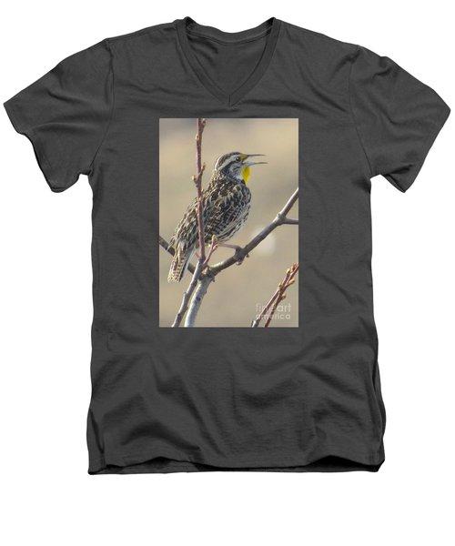 Western Meadowlark Men's V-Neck T-Shirt by Frank Townsley