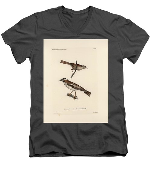 White-browed Sparrow-weaver And Grass Or Bush Warbler Men's V-Neck T-Shirt