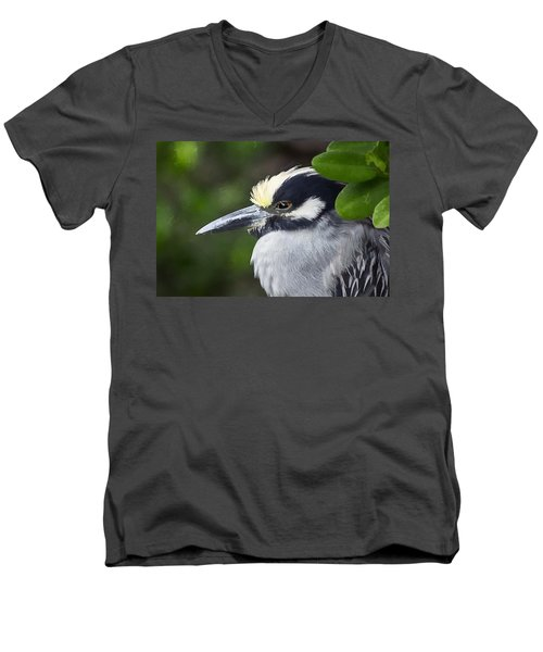 Yellow-crowned Night Heron Men's V-Neck T-Shirt