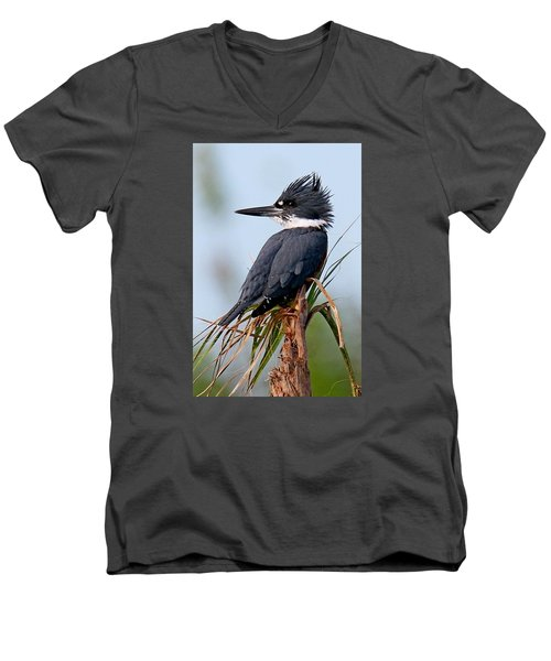 Belted Kingfisher Men's V-Neck T-Shirt