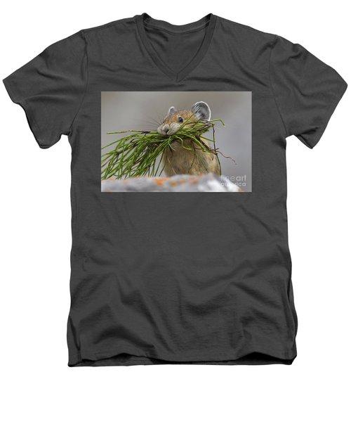 Pika With A Mouthful  Men's V-Neck T-Shirt