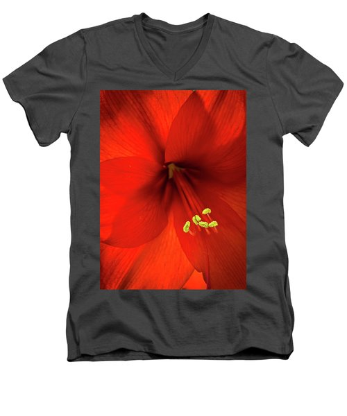 Amaryllis Men's V-Neck T-Shirt