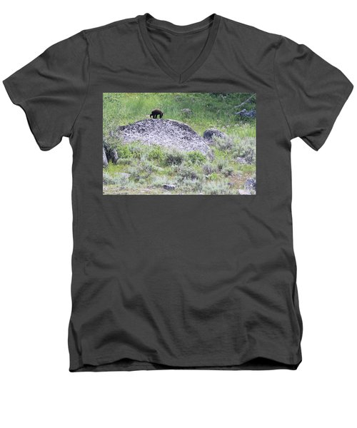American Black Bear Yellowstone Usa Men's V-Neck T-Shirt