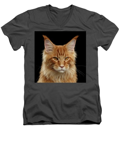 Angry Ginger Maine Coon Cat Gazing On Black Background Men's V-Neck T-Shirt