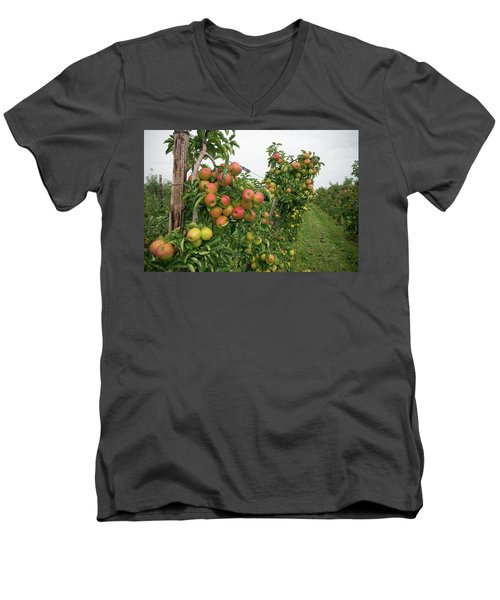 Apple Orchard Men's V-Neck T-Shirt by Hans Engbers