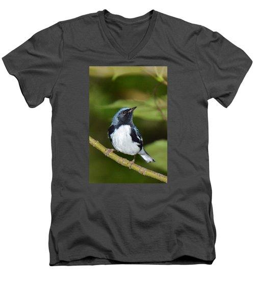 Black-throated Blue Men's V-Neck T-Shirt by Alan Lenk
