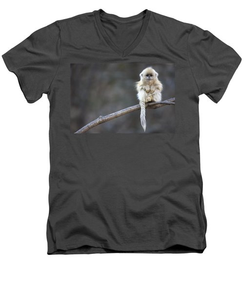 Golden Snub-nosed Monkey Rhinopithecus Men's V-Neck T-Shirt