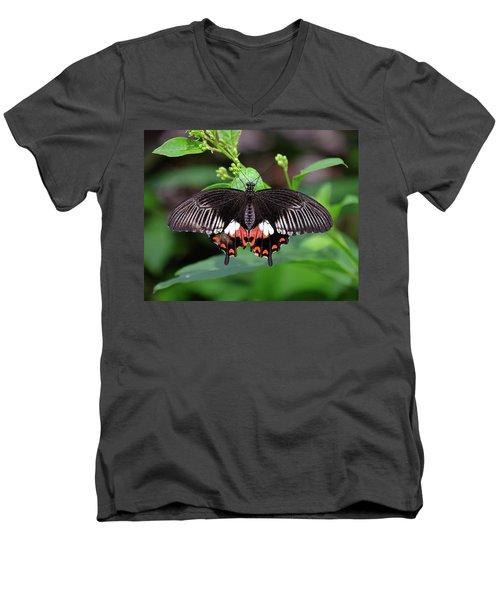 Great Mormon Butterfly Men's V-Neck T-Shirt by Ronda Ryan