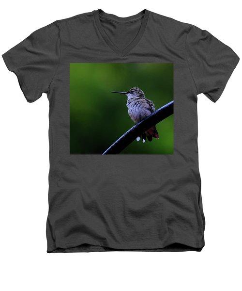 Hummingbird Portrait Men's V-Neck T-Shirt by Ronda Ryan