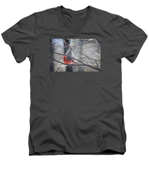 Northern Cardinal Men's V-Neck T-Shirt