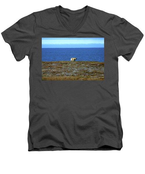 Polar Bear Men's V-Neck T-Shirt