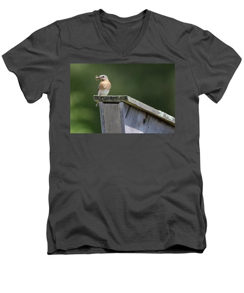 Eastern Bluebird Calverton New York Men's V-Neck T-Shirt