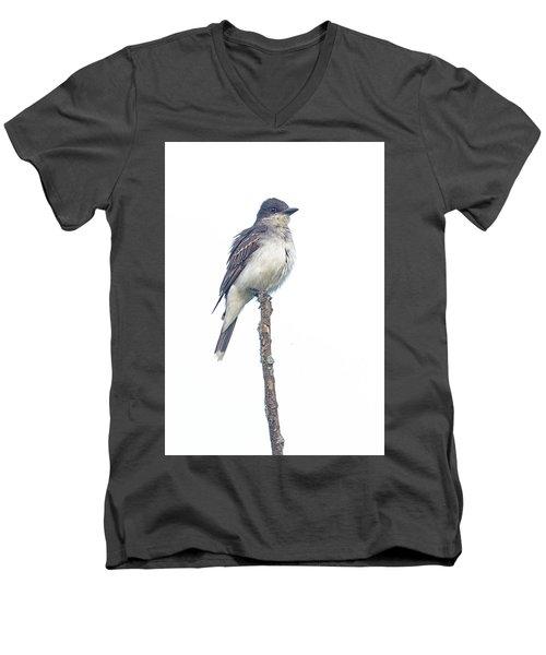 Eastern Kingbird Men's V-Neck T-Shirt