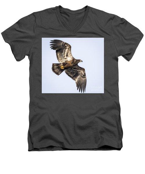 Juvenile Bald Eagle  Men's V-Neck T-Shirt
