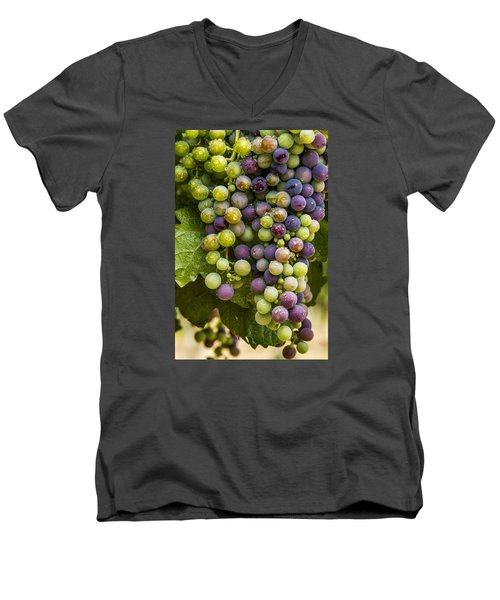 Red Wine Grapes Hanging On The Vine Men's V-Neck T-Shirt