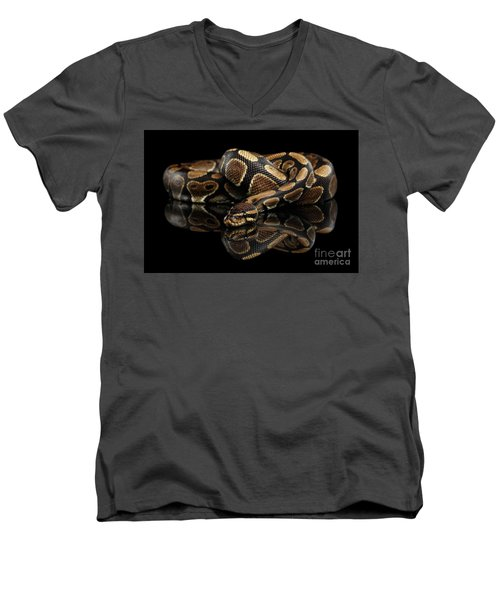 Men's V-Neck T-Shirt featuring the photograph Ball Or Royal Python Snake On Isolated Black Background by Sergey Taran
