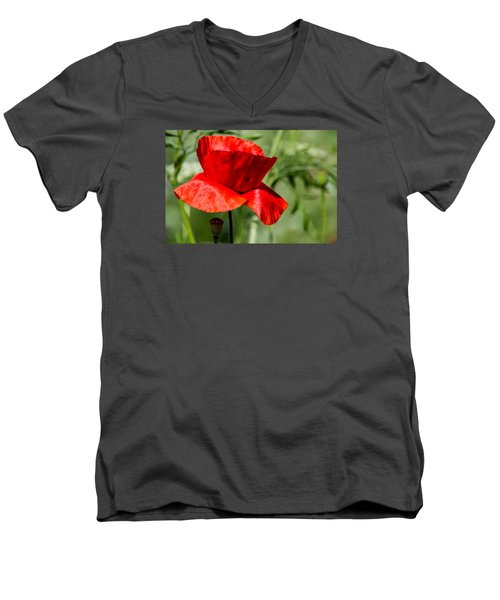 Poppy Men's V-Neck T-Shirt by Martina Fagan