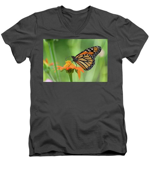 Monarch Men's V-Neck T-Shirt by Ronda Ryan