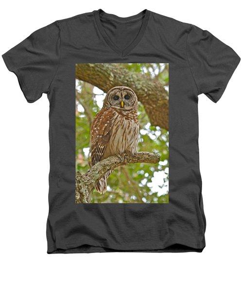 A Barred Owl Men's V-Neck T-Shirt