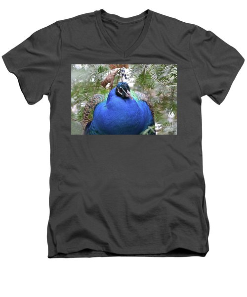 A Close Up Look At A Blue Peafowl Men's V-Neck T-Shirt