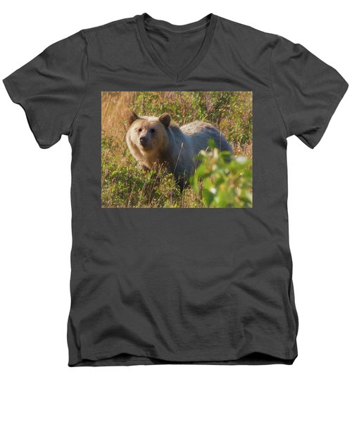 A  Female Grizzly Bear Looking Alertly At The Camera. Men's V-Neck T-Shirt