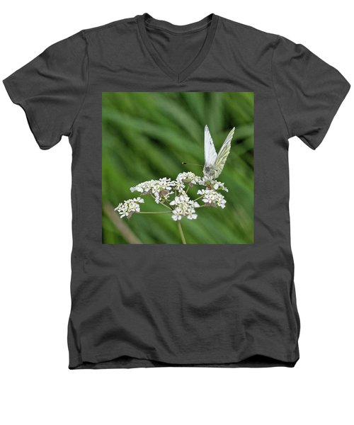 A Green-veined White (pieris Napi) Men's V-Neck T-Shirt by John Edwards