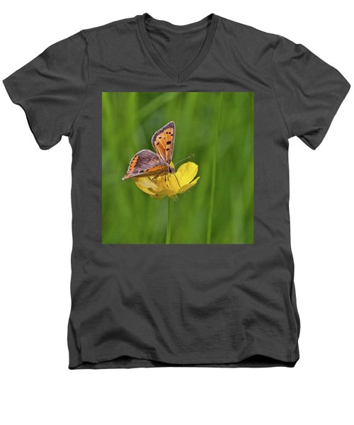 A Small Copper Butterfly (lycaena Men's V-Neck T-Shirt