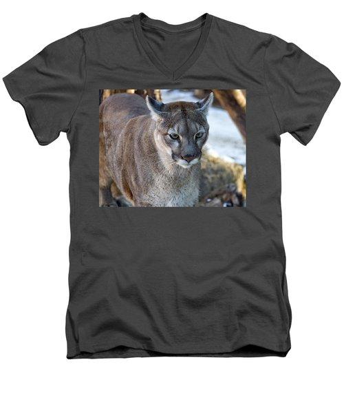A Stunning Mountain Lion Men's V-Neck T-Shirt