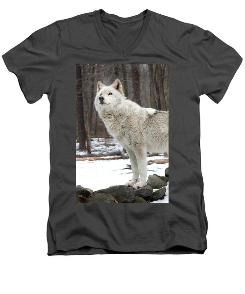 Men's V-Neck T-Shirt featuring the photograph A Wolfs Modeling Pose by Gary Slawsky