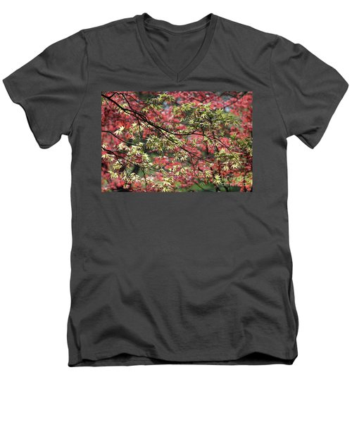 Acer Leaves In Spring Men's V-Neck T-Shirt