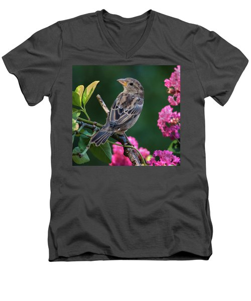 Adorable House Finch Men's V-Neck T-Shirt by Jim Moore