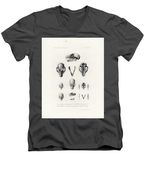 African Mammal Skulls Men's V-Neck T-Shirt