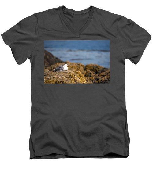 Afternoon Nap Men's V-Neck T-Shirt