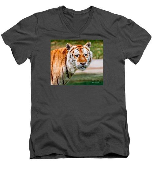 Aging Tiger Men's V-Neck T-Shirt